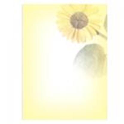 Attēls no Vēstuļu papīrs Saulespuķe 5 A4/20