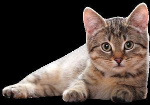 Изображение для категории Товары для кошек