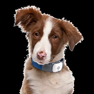 Изображение для категории Товары для собак