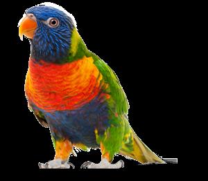 Изображение для категории Корма для птиц