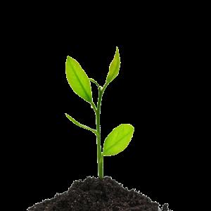 Изображение для категории Семена и саженцы