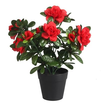 Изображение Acālijas podiņā rozā,sarkani
